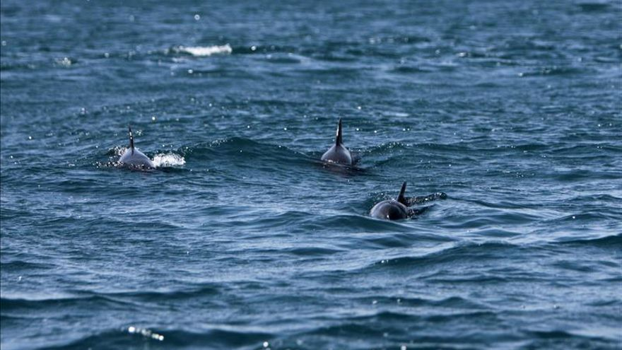 La observación de cetáceos, un atractivo turístico ya regulado en Guatemala