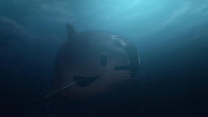 Imagen de la vaquita en un fotograma del documental