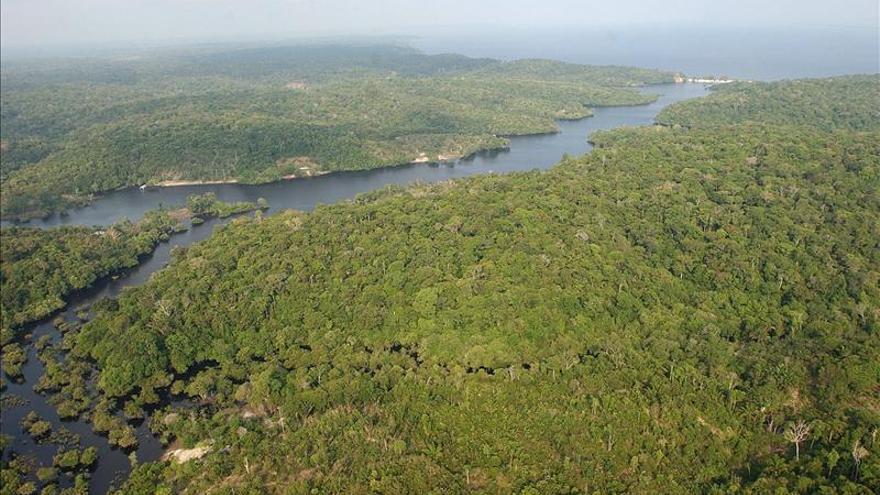 Estudiarán el papel de la jungla amazónica en el ciclo global del carbono