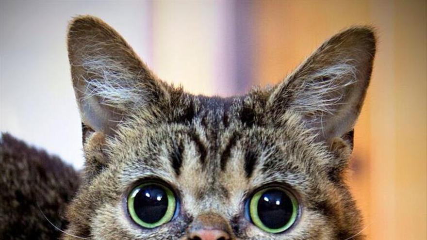 Jóvenes científicos secuenciarán el genoma de una popular gata en internet