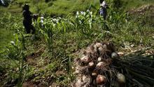 República Dominicana y Taiwán impulsarán la agricultura en Haití