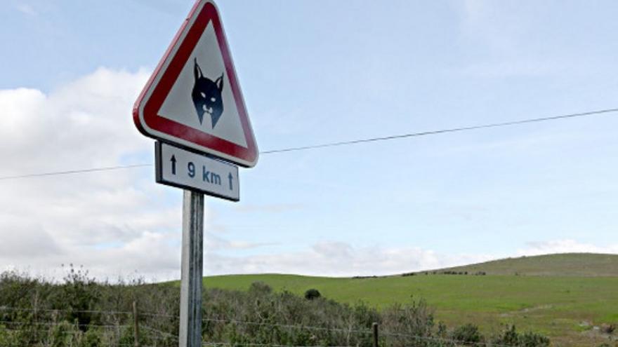 Una señal de tráfico advierte de la presencia de linces