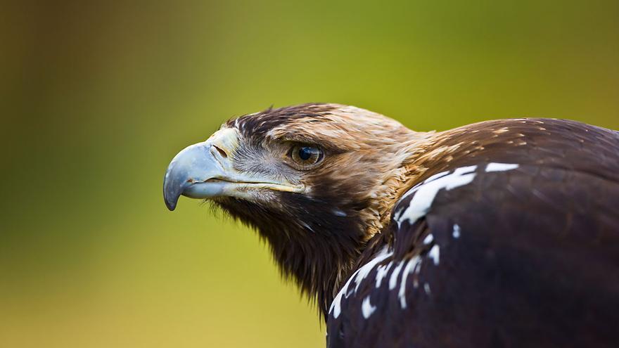 Imponen una fianza de 168.000 euros al dueño de un coto y dos guardas por envenenar a más de 50 aves