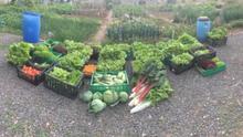 Los productos cultivados en los huertos urbanos de Las Palmas de Gran Canaria que serán donados a Cáritas.