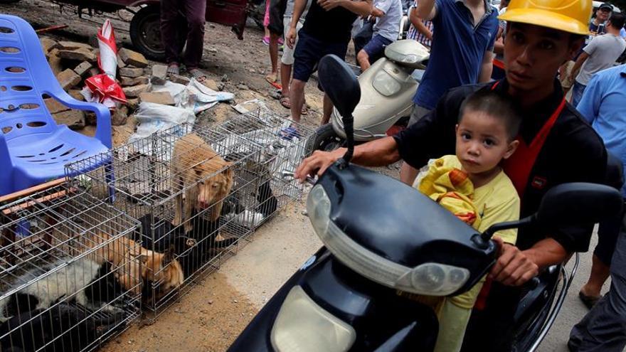 La ciudad china de Yulin inicia mañana su controvertida carnicería de perros