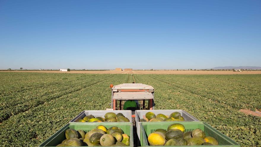 Mercadona prevé comprar 72.000 toneladas de melón de origen nacional para 2020, muchas procedentes de Almería