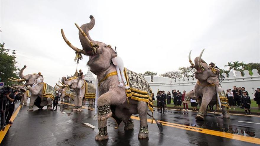 Una formación de elefantes presenta sus respetos al difundo rey de Tailandia