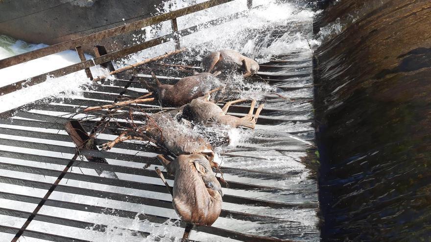 Balsas, canales, embalses... una trampa para millones de animales