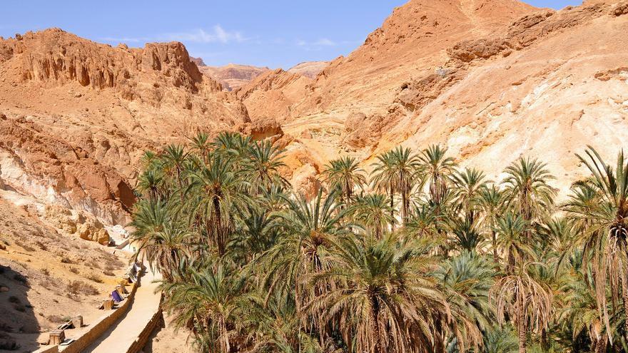 Las palmeras contrastan con sus copas verdes con las tierras pardas del oasis de Chebika. Dennis Jarvis