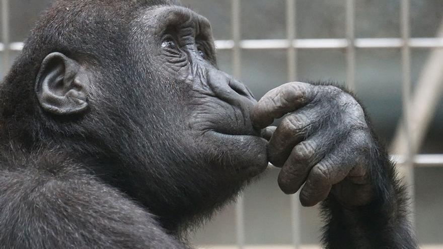 Cada vez más estudios apuntan a la existencia de empatía en el mundo animal. (DP).