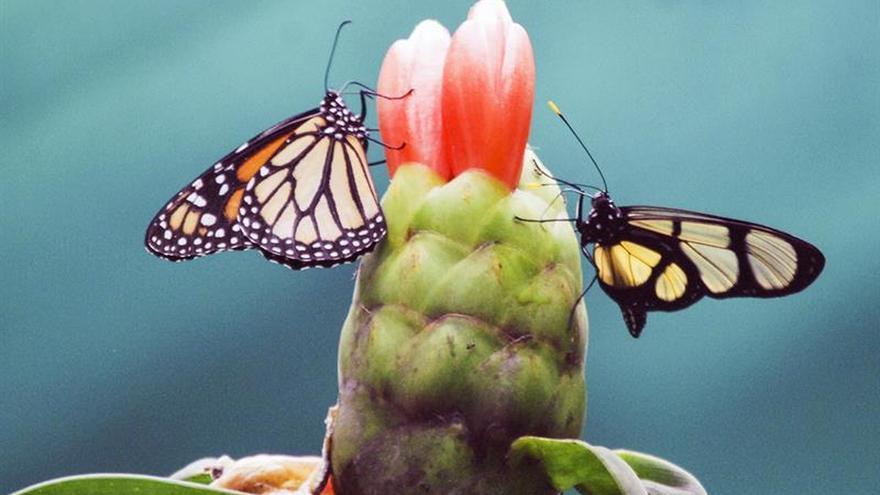 ¿Por qué están desapareciendo los insectos?