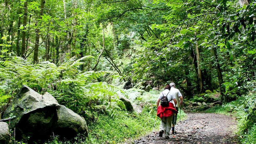 Senderistas en el bosque de Los Tilos, en la isla de La Palma. VA