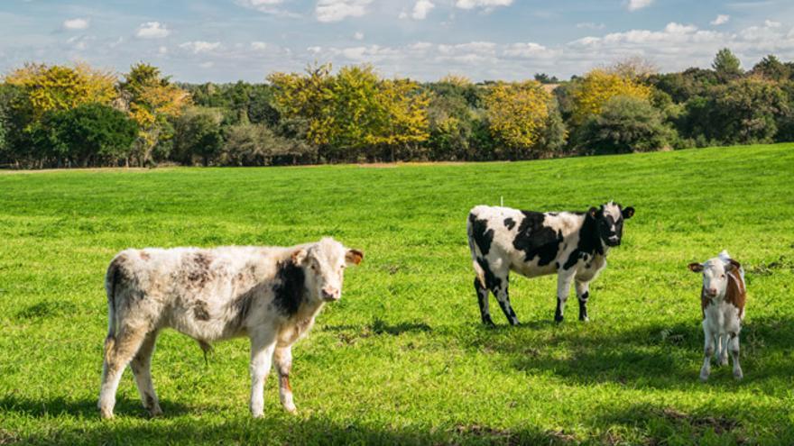 Un estudio de la Universidad de Newcastle asegura que poner nombre a las vacas aumenta la producción de leche.