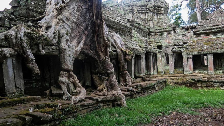 Raíces de árbol, colonizando las ruinas de un templo.
