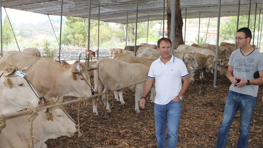El alcalde de El Paso, Sergio Rodríguez, en la Fería Insular de Ganado Autóctono.