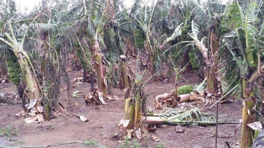 Daños causados por el viento en La Gomera