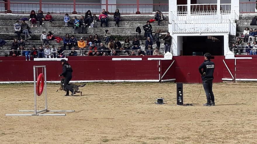 Los guías caninos de la Policía Foral estrenan la plaza de toros de Estella como 'pipican'.