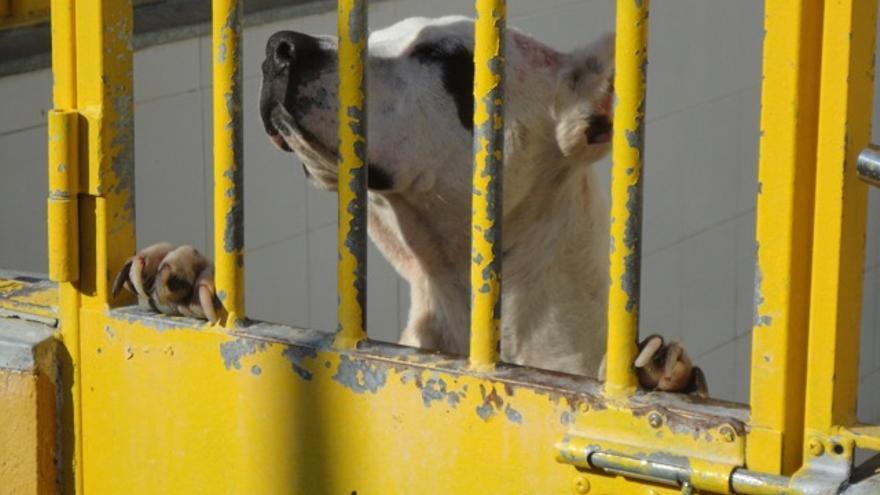 perro peligroso perrera Badajoz