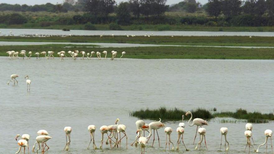 WWF denuncia que España incumple condiciones de Europa para proteger Doñana