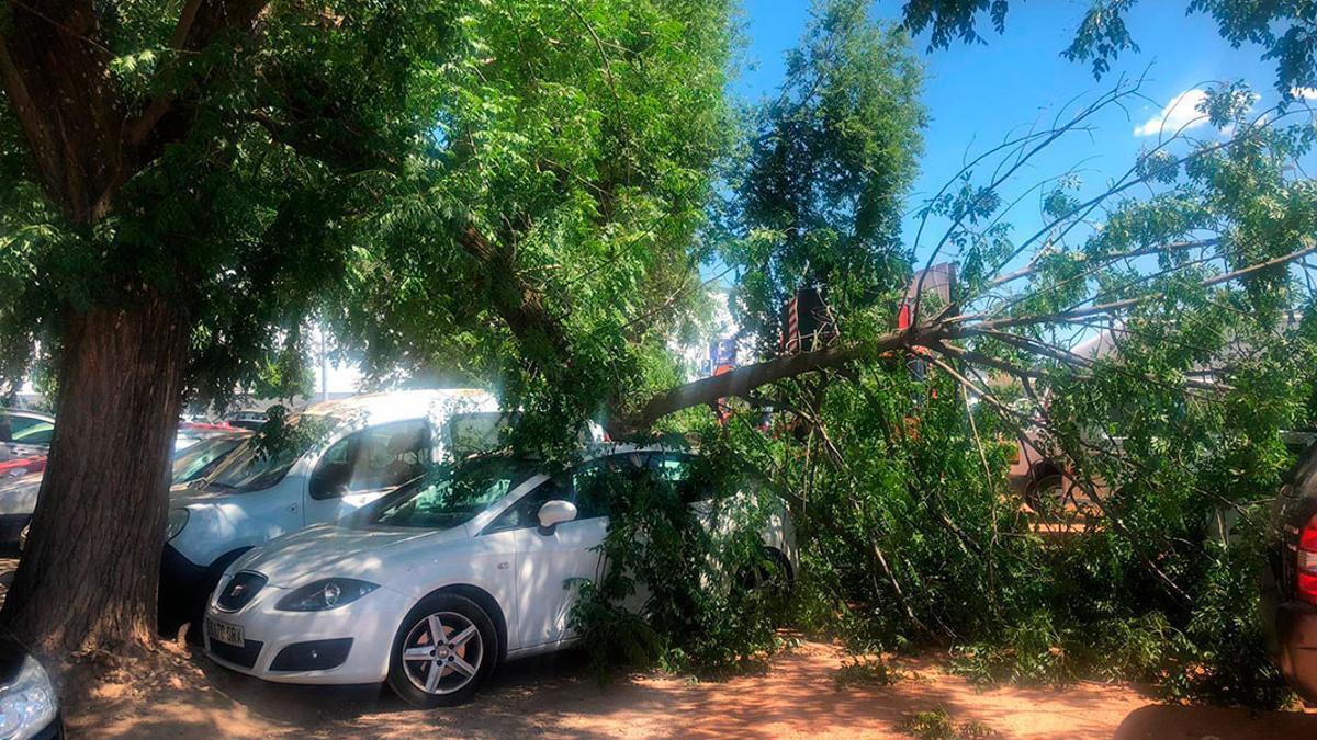 Imagen de archivo de un coche afectado por caída de ramas.