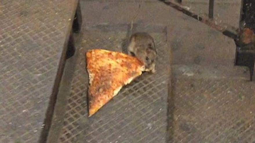 Pizza Rat, ¿viral o éxito fabricado?