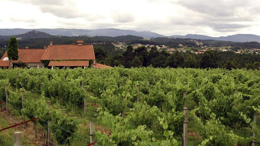 El PSOE reclama una estrategia nacional del vino que compense la caída del consumo