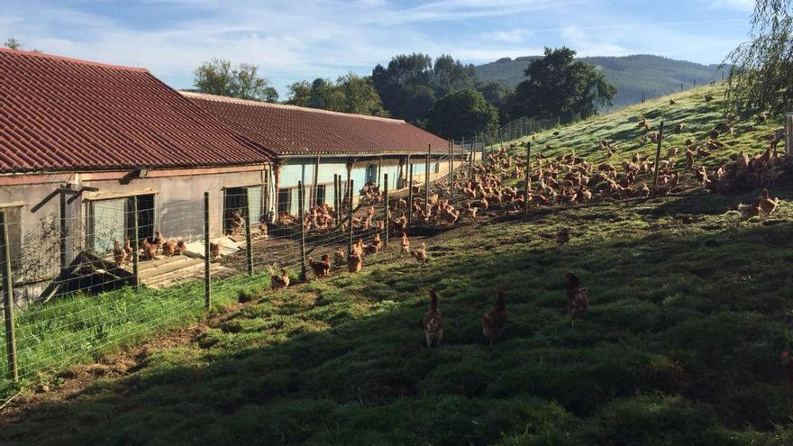 Granja de producción ecológica de huevos.