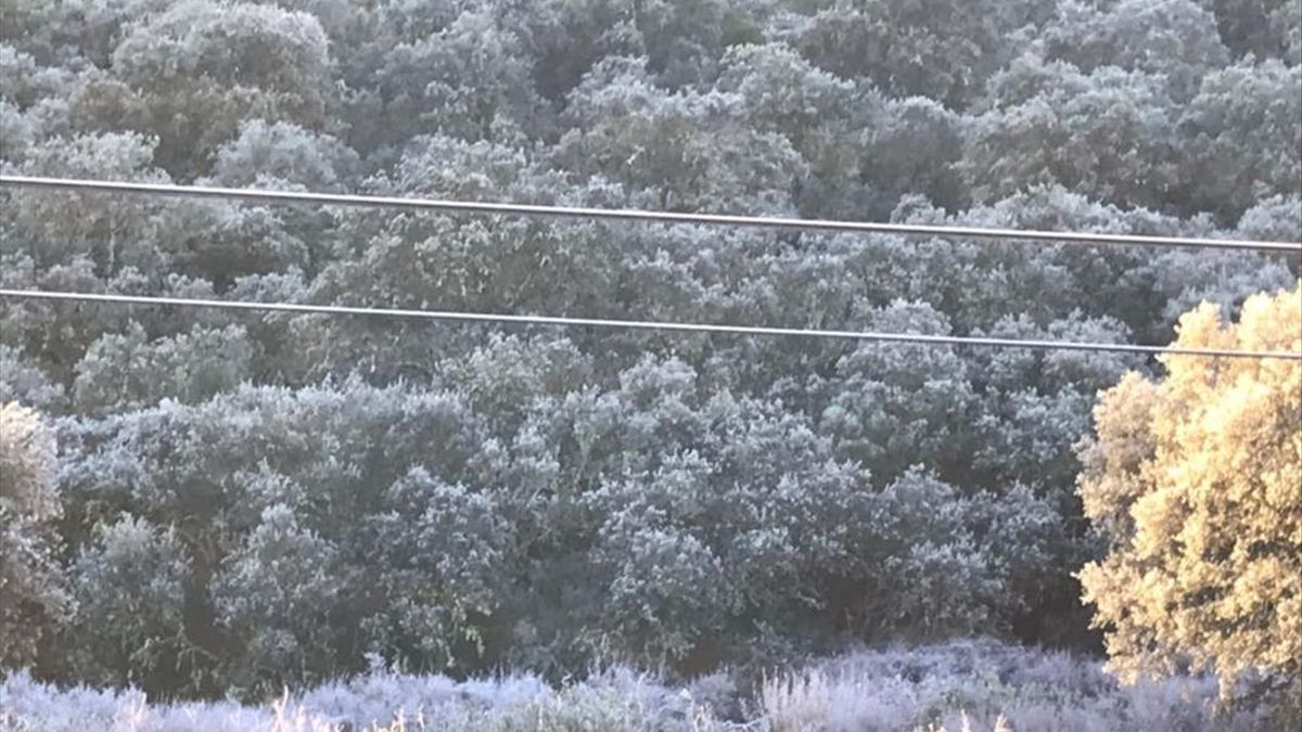 Encinas heladas por Cerro Muriano | KIKE IRAUNDEGI