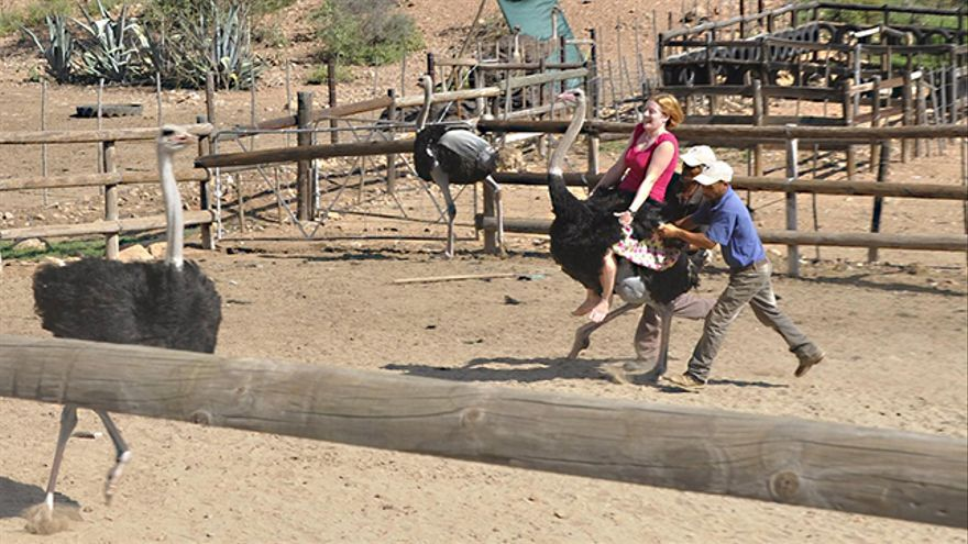 Turismo irresponsable con avestruces