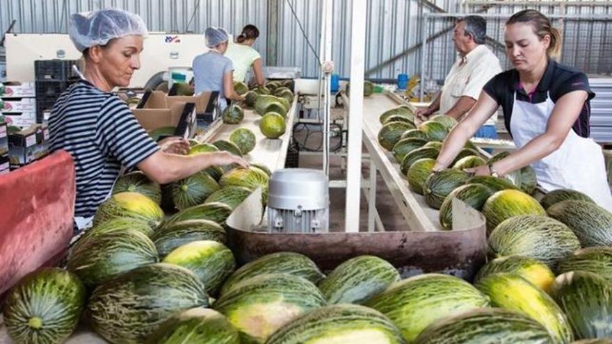 La Lonja del Melón y Sandía se inicia con precios bajos aunque el sector espera que la exportación eleve las cotizaciones