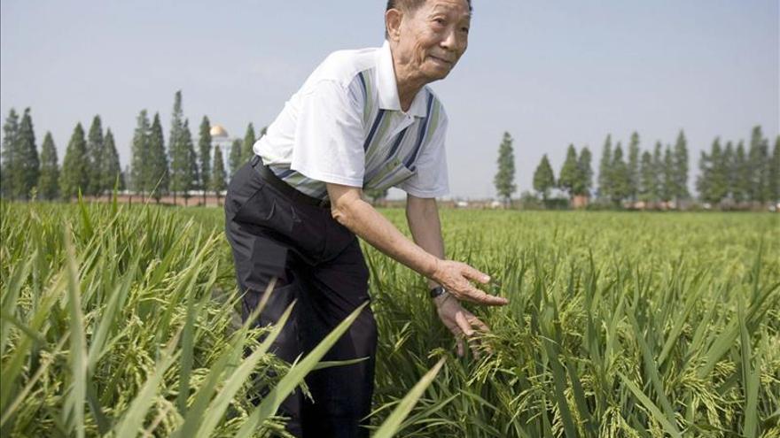 """El """"padre del arroz híbrido"""" apoya la producción de los OGM con """"cautela"""""""