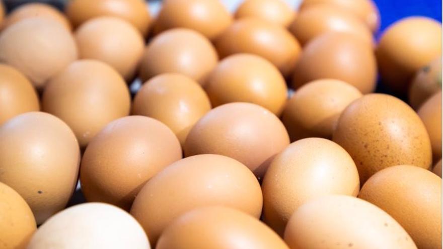 El sector del huevo pide ayudas y plazos para la eliminación de jaulas anunciada por la UE en su estrategia de 'De la Granja a la Mesa'
