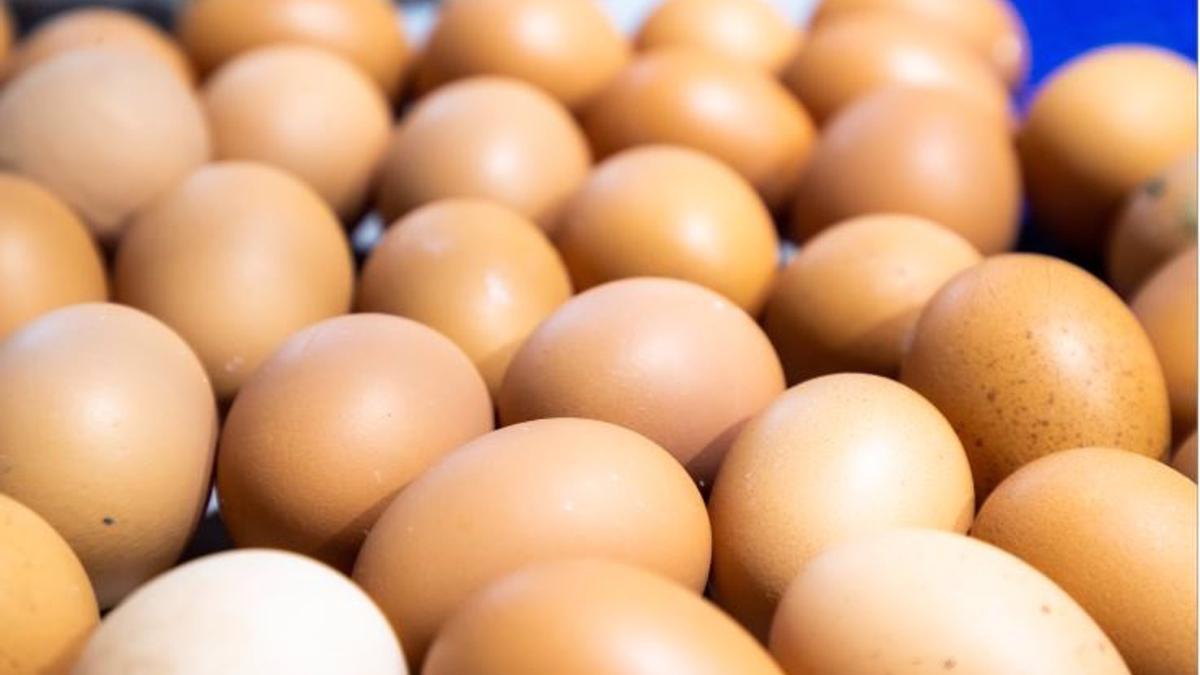 Huevos - INPROVO