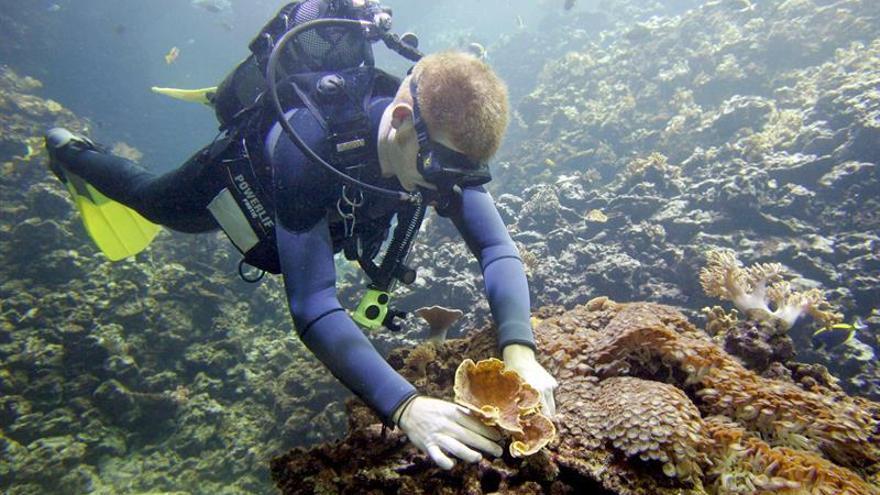 Los prados marinos reducen a la mitad la contaminación de mares y océanos