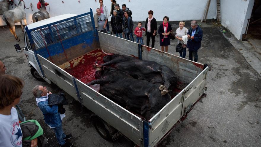 Varias personas, entre ellas algún menor, observan los cuerpos de dos toros desangrados. Foto: Askekintza/Tras Los Muros