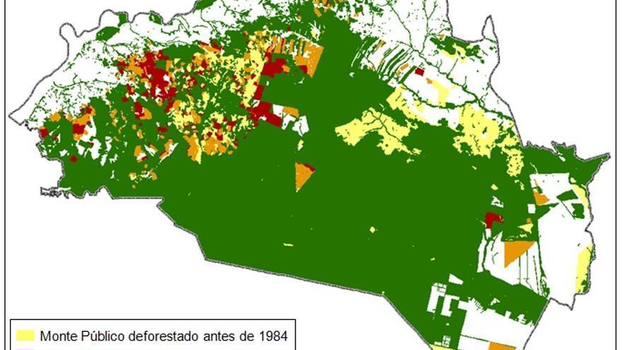 Deforestación de la Corona Norte de Doñana