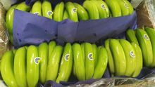Plátanos de la cooperativa CUPALMA.