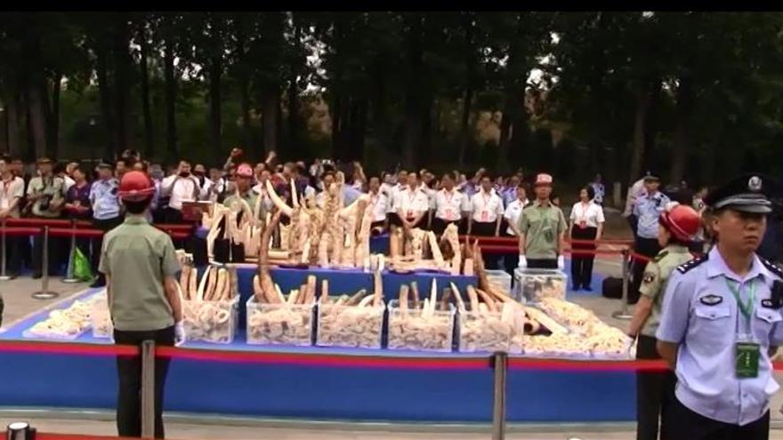 China no quiere ser la asesina de los elefantes
