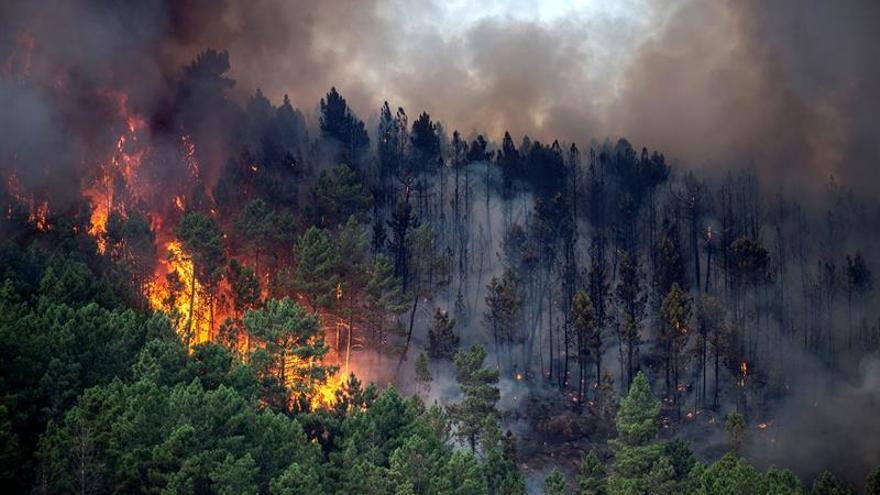 Quince incendios forestales azotan Galicia