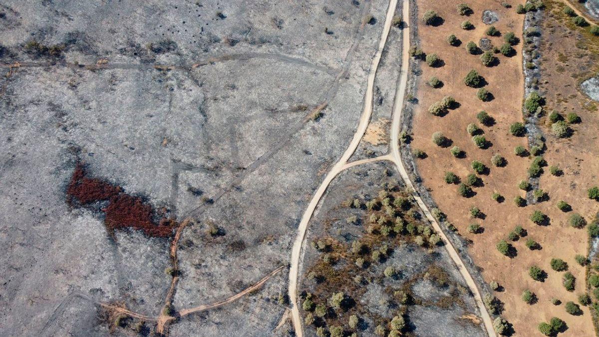 Imagen de terreno quemado en Alcaracejos