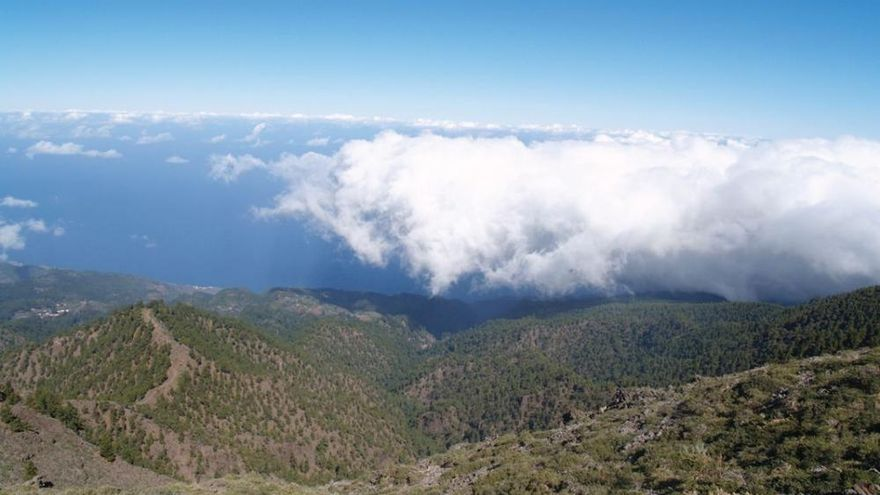 Reserva Natural Integral del Pinar de Garafía.
