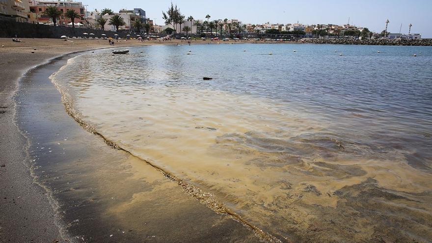 Microalgas en la playa de Arguineguín. (Alejandro Ramos).