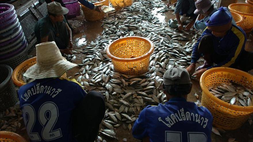 Denuncian casos de esclavitud en barcos de pesca en aguas de Tailandia