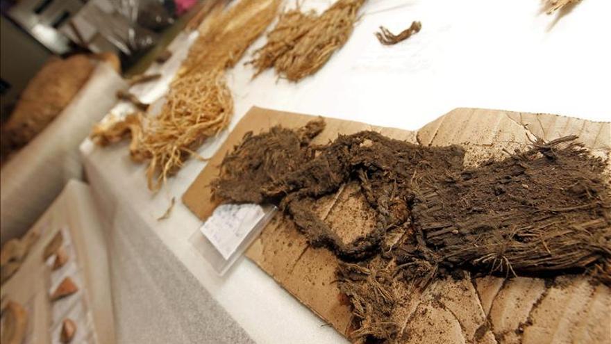 Una obra de carretera destapa un yacimiento intacto de agricultura aborigen