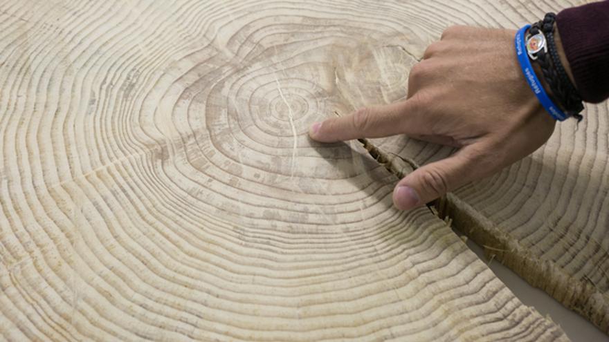El estudio se realiza a partir de los anillos de los árboles.