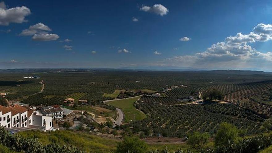 La Diputación de Jaén promociona el bosque de olivar y el oleoturismo en el mercado francés