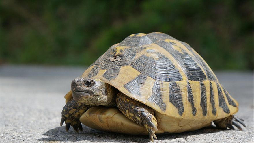Esos momentos en los que navegar en internet tiene la velocidad de esta mascota   Foto: Mr Hicks46