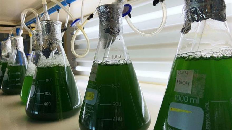 Crean en Chile un papel con alga marina para conservar fruta de exportación