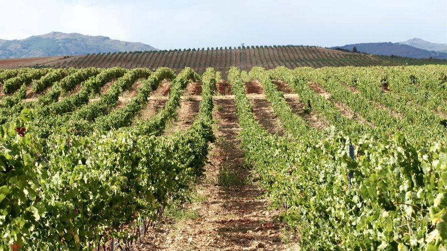 Finca Río Negro, primera bodega del centro peninsular en incorporarse al organismo internacional que vela por conservar la viticultura de montaña