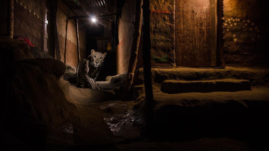 C:\fakepath\© Nayan Khanolkar_Wildlife Photographer of the Year- Urban winner.jpg
